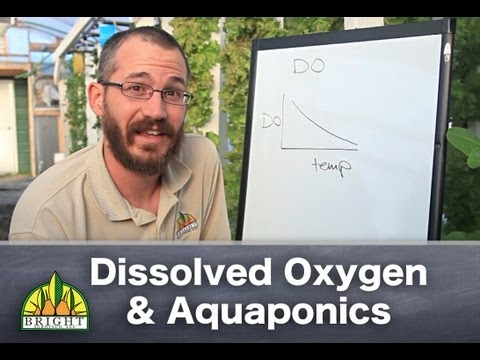 Aquaponics & Dissolved Oxygen: The Basics