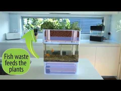 Aquaponicals - Mini Aquaponics System