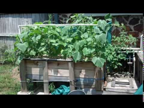 Aquaponic Gardening 18 Months In