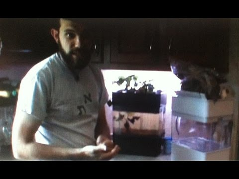 Aquaponicals table top aquaponics review plus how to set up your unit