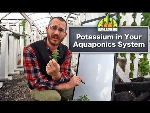 Potassium in Aquaponics (Part 2) - Potassium in Your System
