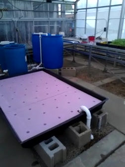 Aquaponic System at Community College