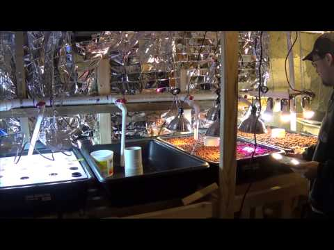20150127 Introduction to Aquaponics - My Indoor Basement Set up is Ready!