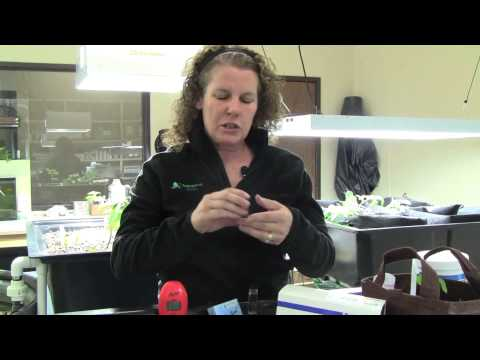 Iron Deficiency in Aquaponics - Part 2: Testing Using the Iron Checker