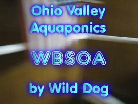 WBSOA-Wild_Dog