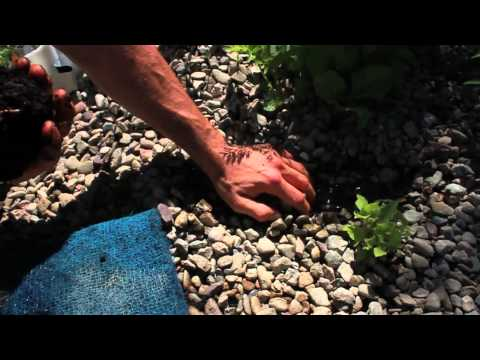 Ysidro Avila shares on the benefits of Aquaponics // Mending News