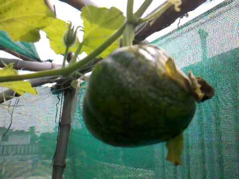 food garden update 17 May 2013