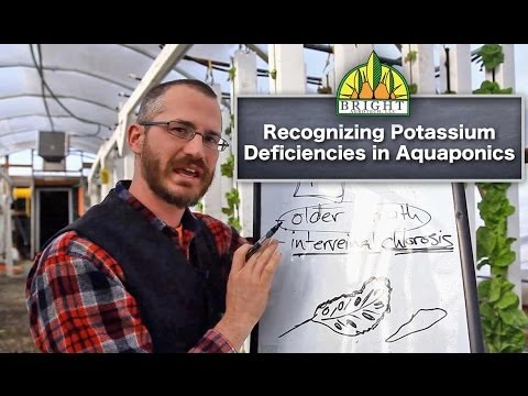 Potassium in Aquaponics (Part 3) - Diagnosing Deficiencies
