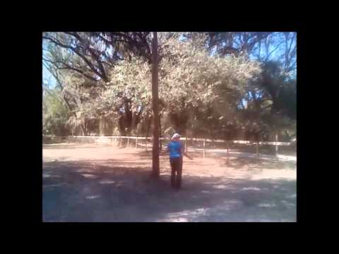 Missouri Foxtrotter Gaits Teaching Dolly to Canter Pt 4 Horse