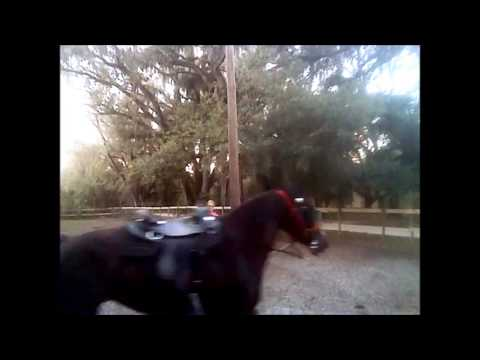 Missouri Foxtrotter Gaits -Teaching Dolly to Canter Pt 2