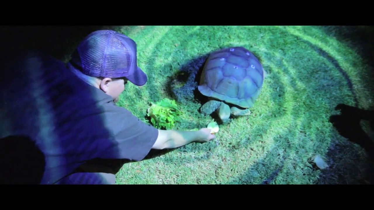 Tortoise Projection Mapping & Tracking