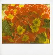 fiori 2011