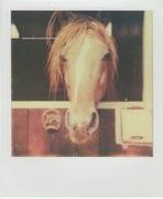 Il cavallo di mio Zio. Paglieta 2012