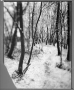 Incredible paths #11N  ( Frozen forest. In the path, sounds of falling ice.)