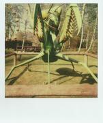 25/04/13 - Zoo Safary - Mantide Religiosa