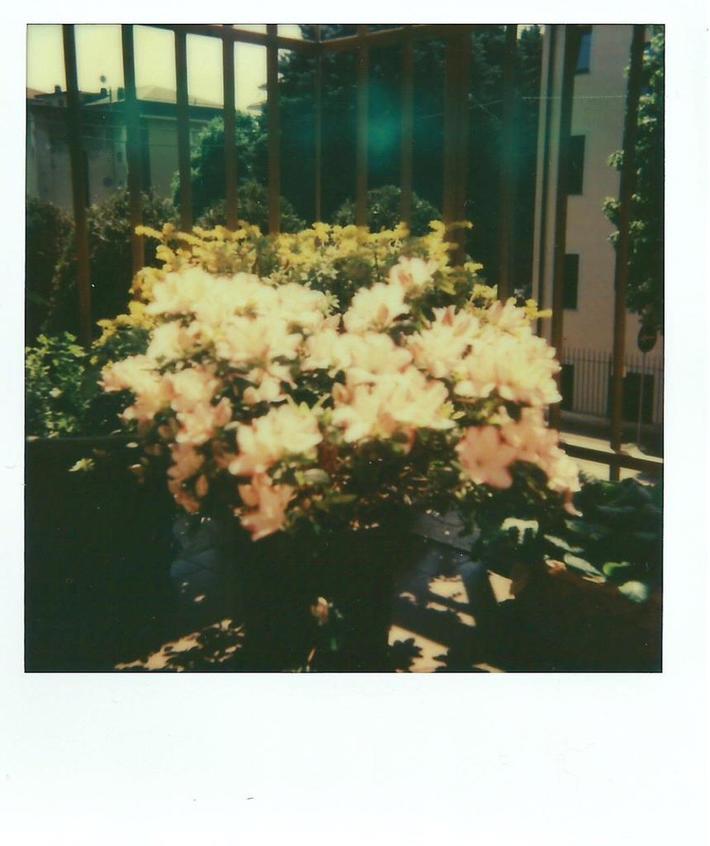 Primavera Casa Vigolo