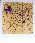 spider web on polaroid