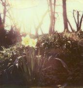 spring's interpretation