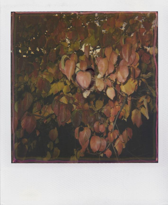 (heart) #57
