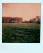 30 Marzo - '14 Parco del Ticino - all'imbrunire -