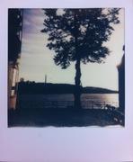 ensamma träd
