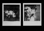 flowerpower1: la cascata di fiori