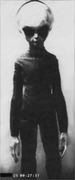 Skinny Bob / EBE - Roswell crash survivor