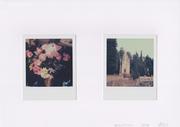 Antistress - Staglieno - 2 Polaroid ( Impossible 600 color ) - 2016