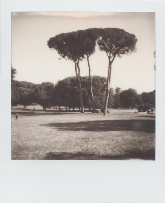 Parco Roma 1
