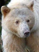 Leo White Bear
