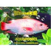 Khmer Aquaponics