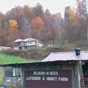 Blooms-n-Bees Lavender & Honey