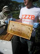 Big Apple Apiary Beekeeping Apprenticeship