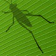 Grasshopper Cloud Event - NY - FULL