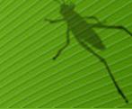 Introduction of Grasshopper in Bangkok