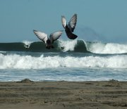 Surfers and Pigeons