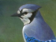 Artists Reception for Eye on Nature