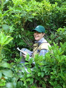 Tree Identification Workshop