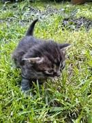 Curious little creature!