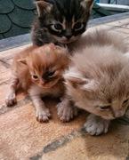 Dixie's little kittens