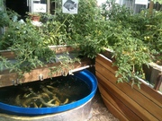 Introduction to Aquaponics - GrowHaus