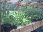 Aquaponic and Greenhouse growers meeting