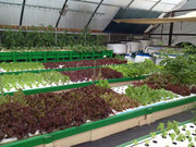 Green Acres Aquaponics Basics Class - 2/22