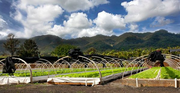 """Aquaculture's Contribution to Hawaii's Food Security"" conference & Aquaponics Farm Tour"