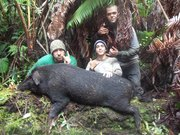 ONE MOA BOAR DOWN V-TOWN