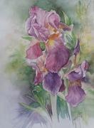 Iris de chez Gene
