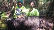 186.2lb 1st place Biggest Boar...