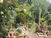 NGS charity open garden