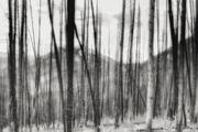Anthropocene 1