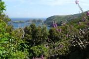 Rhodadendron Walk
